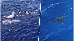 Maudynių nepamirš visą gyvenimą – į netikėtai priplaukusį ryklį teko paleisti ne vieną kulką