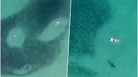 Žmogus praplaukė tiesiai virš ryklio – nė neįtarė, kad gresia didelis pavojus
