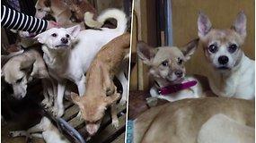 Mažoje patalpoje rasti 164 neprižiūrėti šunys: savininkai sako neturėję pinigų sterilizacijai, todėl augintinių banda tik didėjo
