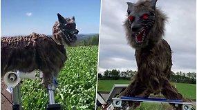 Šalia namų klaidžioja meškos – sunerimę gyventojai bando gintis statydami vilkus-robotus