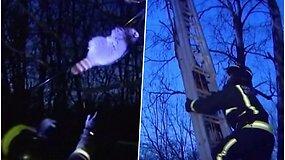 Ugniagesiai lipo į medį gelbėti sušalusio meškėno – žemyn gyvūnas nusileido tarsi cirko akrobatas