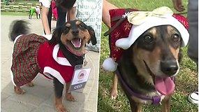 Žaismingais kalėdiniais personažais persirengę šuniukai siunčia svarbų prašymą – atsisakyti fejerverkų