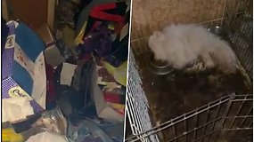 Pareigūnai pakraupo: klaipėdietė gyveno šiukšlėmis užverstame bute ir veisė šunis