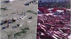 Įspūdingas laimikis: per 11 d. žvejams pavyko pagauti 450 000 kg  žuvies – didžiąją dalį jau spėjo parduoti