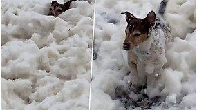 Šunelis džiaugėsi neįprasta pramoga – nardė putų vonioje po atviru dangumi