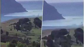 Užfiksavo, kaip į krantą ritasi didžiulė banga – po žemės drebėjimų kilo cunamio pavojus