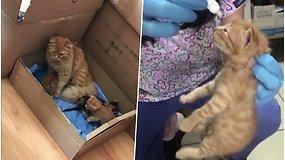 Katė pati atnešė sergančius kačiukus į veterinarijos kliniką ir miaukė tol, kol mažyliai sulaukė pagalbos