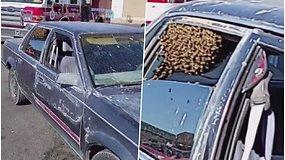 Kol vairuotojas apsipirkinėjo, automobilį užėmė bičių spiečius