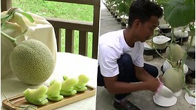 Vieni brangiausių vaisių pasaulyje: augdami klausosi klasikos ir yra reguliariai masažuojami