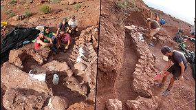 Atradimas nustebino net mokslininkus – atkastos galimai didžiausio dinozauro liekanos