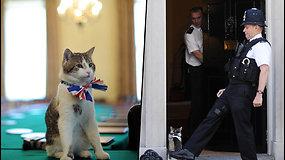 Londono rezidencijoje šeimininkauja katinas Larry – peles premjero namuose gaudo jau 10 metų