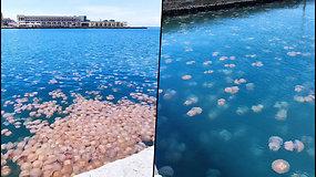 Pasigrožėkite neįprastu vaizdu – Italijos uosto miestelyje plūduriuojašimtai medūzų