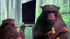 E.Muskas pristatė beždžionę, kuri protu valdo video žaidimą – ateityje siekia išgydyti alzheimerio ligą