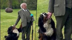 Sensacija tapęs šuo: kol Airijos prezidentas sakė kalbą, jo žaismingai nusiteikęs augintinis reikalavo dėmesio