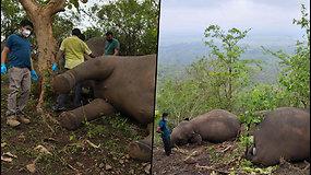 Indijos gyventojai aptiko 18 negyvų dramblių – nespėjo pasislėpti nuo žaibo