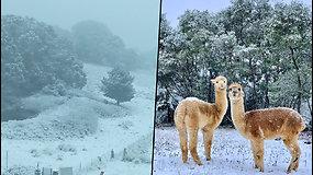 Klimato kaita progresuoja – Australiją padengė sniegas
