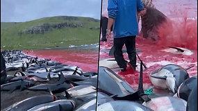 Per medžioklę Farerų salų krante nužudyta per 1400 delfinų