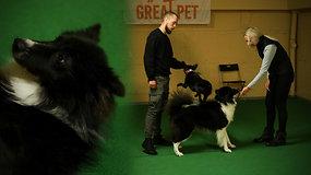Dresuotojas: apie šunų agresiją, įkyrų lojimą ir kaip išmokyti augintinį atsiliepti