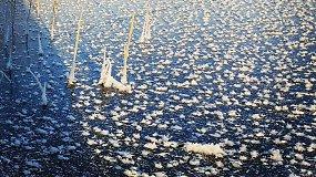Ledas sukaustė Gilužio ežerą