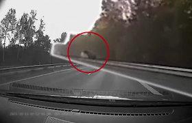 Kvapą gniaužiančiam vaizdui nereikia net avarijos: briedis greitkelyje kėlė šiurpą