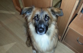 Vilniuje, Naujininkuose, dingo šuo