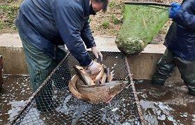 """Akcija """"Lydeka"""": svarbu ne tik žvejybos kontrolė, bet ir gausinti lydekų išteklius"""