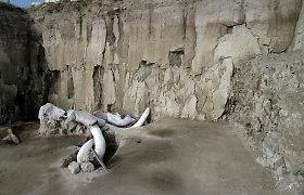 Meksikoje rasti 15 tūkst. metų senumo žmogaus paspęsti mamutų spąstai