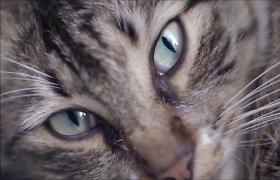 Kas sieja legendinį muzikantą Franką Zappą ir Stambulo benames kates?