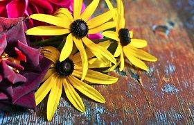 """""""100 augalų"""" savaitės apžvalga: prisiminkime rudbekijas ir vilkdalgius"""