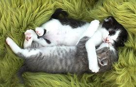 Žiaurus elgesys su gyvūnais Zujūnuose – rastas maišas su 5 kačiukais