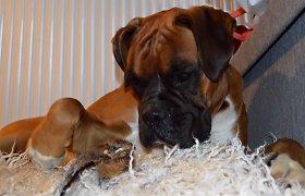 Anglijoje gyvenančios lietuvės šuo paukšteliu rūpinasi it vaiku