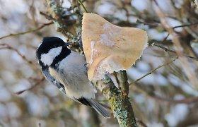 Savaitgalį skaičiuosime mūsų sodus, sodybas ir kiemus lankančius paukščius