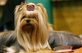 Kinologų draugija nepritaria iniciatyvai bausti gyvūnų šeimininkus dėl jų keliamo triukšmo
