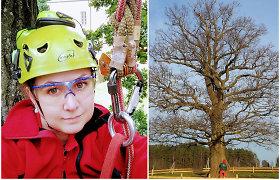 Kristinos Žalnierukynaitės užfiksuoti Lietuvos paminkliniai medžiai ir akimirkos iš arboristų darbo vietų