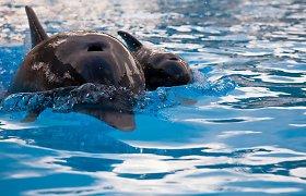 Jūrų muziejuje žiūrovams atsiveria delfinariumas