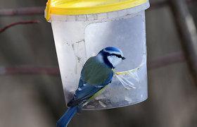 Dėl paukščių lesinimo nesutaria nei patys gamtininkai