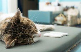 Po svečio apsilankymo Šakių rajono gyventojo katė nebegalėjo atsistoti – teko ją užmigdyti