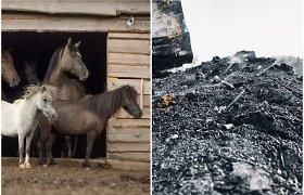 Arklių slėnį nusiaubė gaisras: ligoti gyvūnai neteko prieglobsčio, sudegė 3 t kraiko
