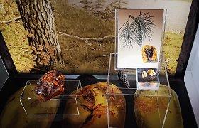 Atnaujinęs ekspozicijas kviečia Palangos gintaro muziejus