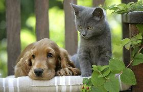 Patarimai: kaip išsirinkti naminį gyvūną