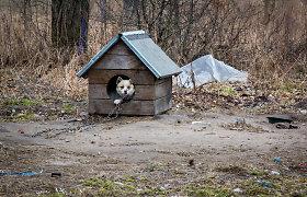 Rokiškio rajone vyras užmušė benamį šunį