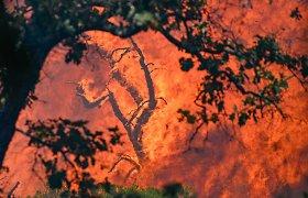 Prancūzijoje siaučiantis gamtinis gaisras pareikalavo vienos gyvybės