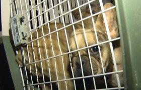 Teismas patvirtinto: gyvūnų gelbėtojai nusikalstamos veikos nepadarė