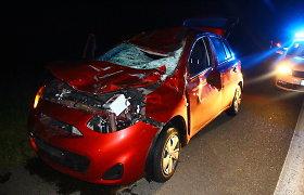 """Ignalinos rajone per susidūrimą su briedžiu paryčiais žuvo """"Toyota"""" vairuotojas"""