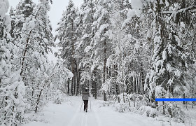 Lygumų slidinėjimas – idealus sportas karantino metu: nuo ko pradėti, kaip išmokti?