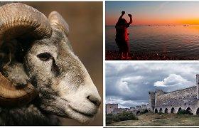 Gotlando sala – trokštantiems ne masinio turizmo krašto