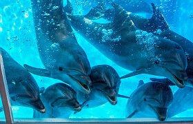 Žiūrovai kviečiami ketvirtadieniais stebėti virtualius delfinų pasirodymus