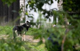VMVT skųs Kretingos teismą, neįžvelgusį žiauraus veisėjos elgesio su gyvūnais