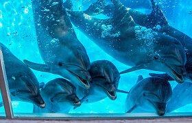 Tiesioginės transliacijos iš Jūrų muziejaus: kaip žaidžia delfinai?
