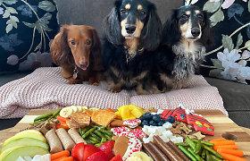 Kūryba be ribų: kaip nuobodžiaujantys šunų savininkai per karantiną lepino augintinius